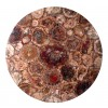 Piano di tavolo in legno fossile
